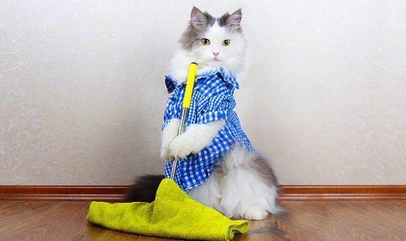 Как правильно мыть полы, когда в доме ребенок или животное