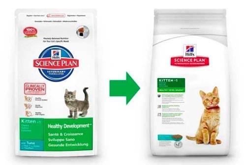 Можно ли кормить котёнка только влажным кормом