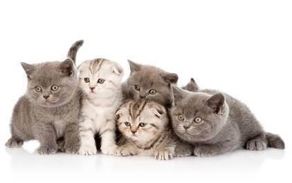 Способы выведения глистов у кота