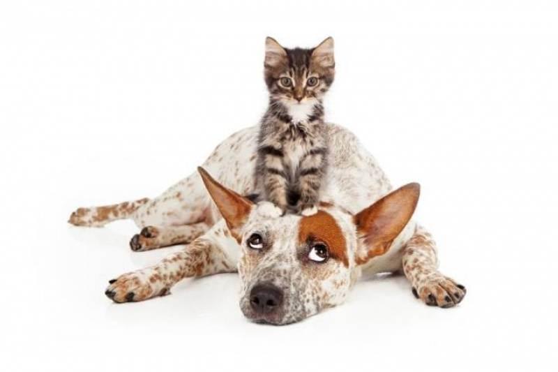Аптечка для кошки | мои домашние питомцы