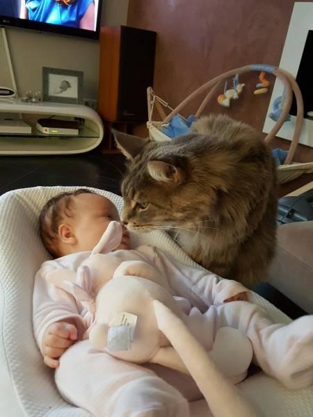 Как отнесётся кошка к новорождённому ребёнку