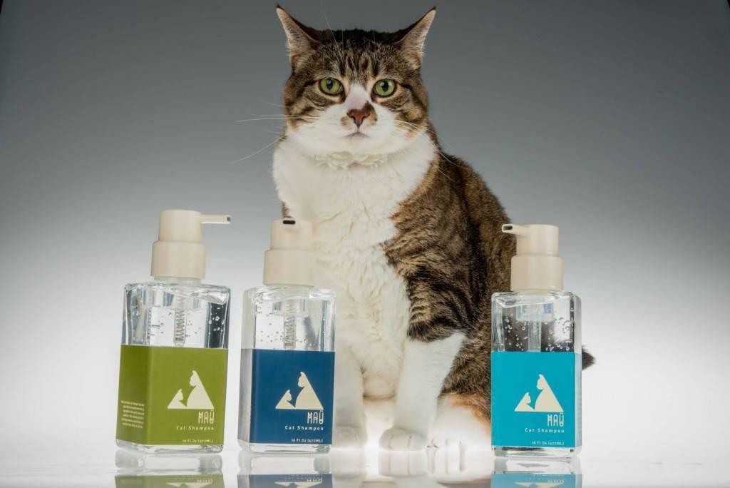 Шампунь для кошек: противоаллергенный состав для длинношерстных котят. чем помыть кота, если нет специального средства? как часто можно использовать кошачий шампунь?