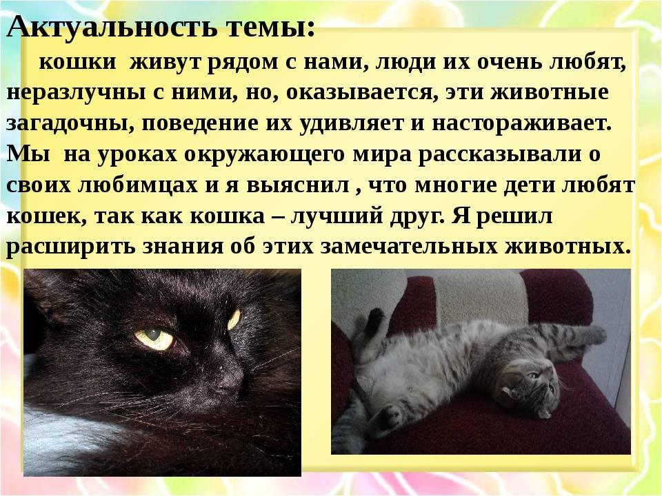 Заводить ли кота в квартире - 10 причин, почему стоит завести кота