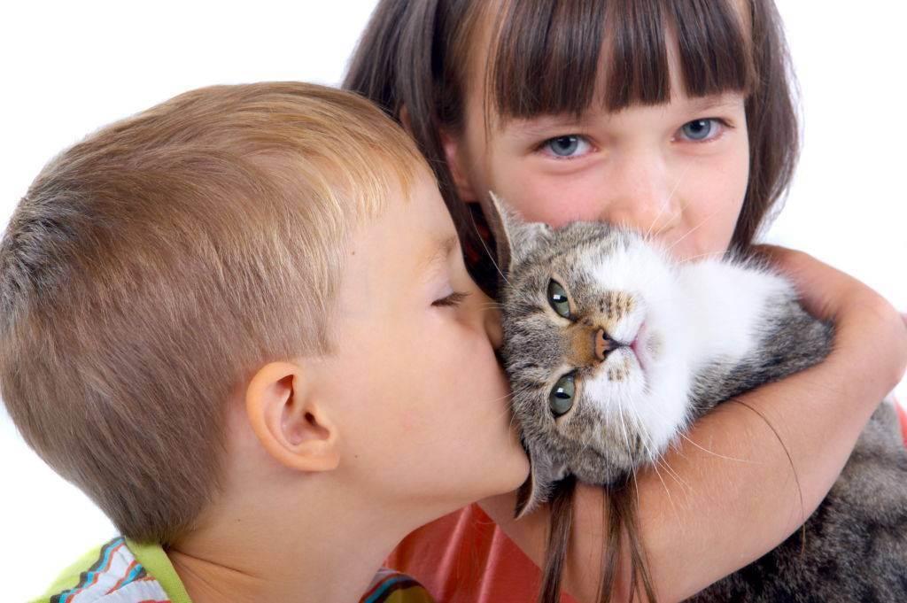 Самые ласковые породы кошек с фотографиями и названиями