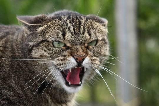 Кошка и мистика: приметы и суеверия