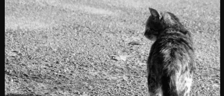 Куда уходят умирать кошки и почему куда уходят умирать кошки и почему