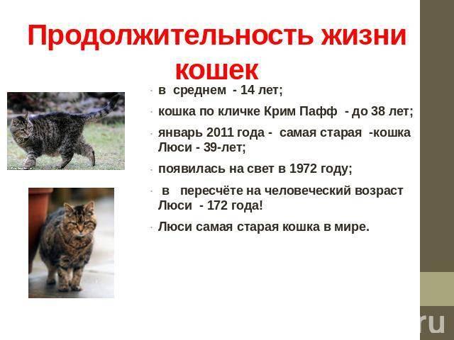 Книга другая, или сколько у кошки жизней?, глава глава 1., страница 1 читать онлайн