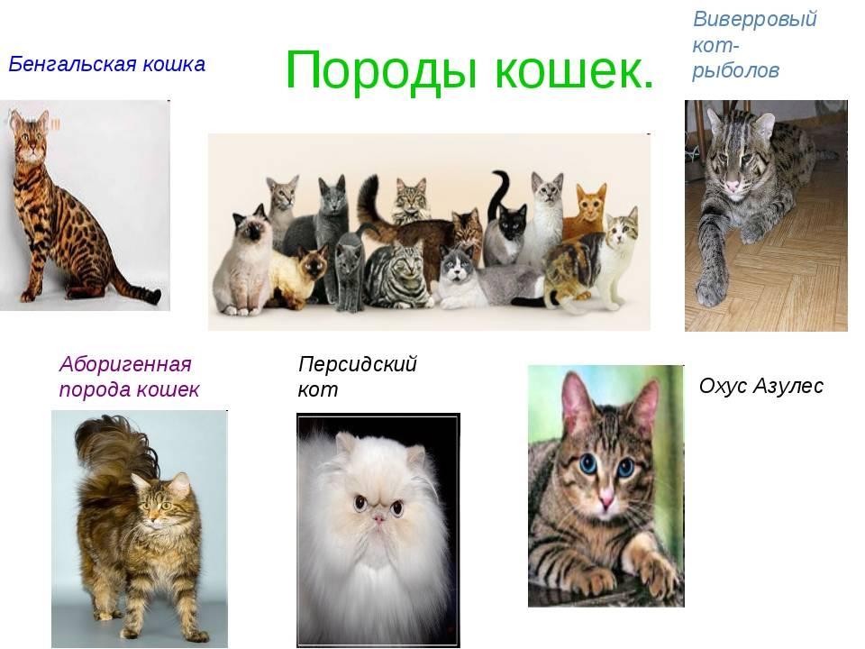 Породы кошек для квартиры и детей:с фотографиями и названиями (самые лучшие спокойные)