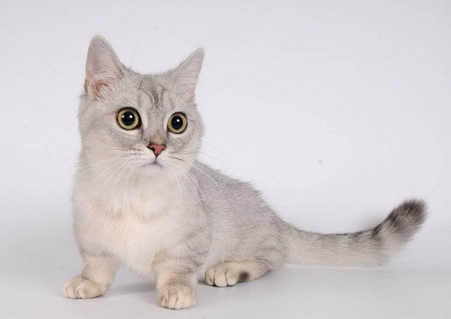 Самые маленькие кошки в мире: характеристика диких и домашних кошек