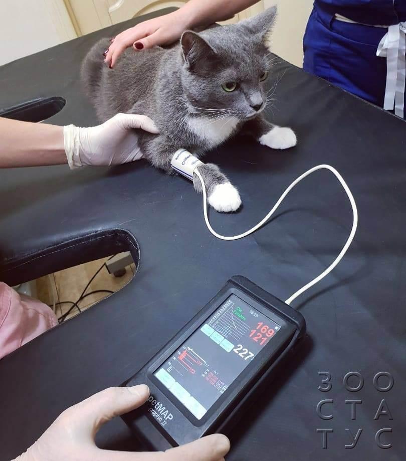 Инфаркт у кошек: симптомы и лечение - catdogpet