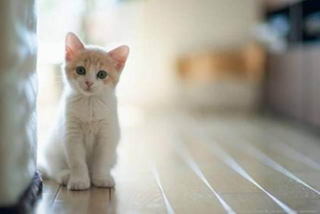 Средства для приучения котенка к лотку