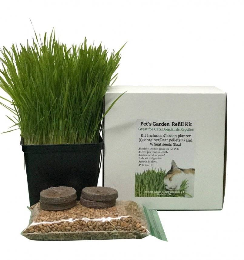 Трава для кошек: выращиваем в домашних условиях