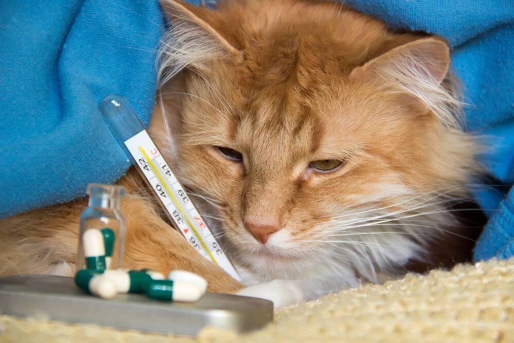 Болеют ли кошки туберкулезом