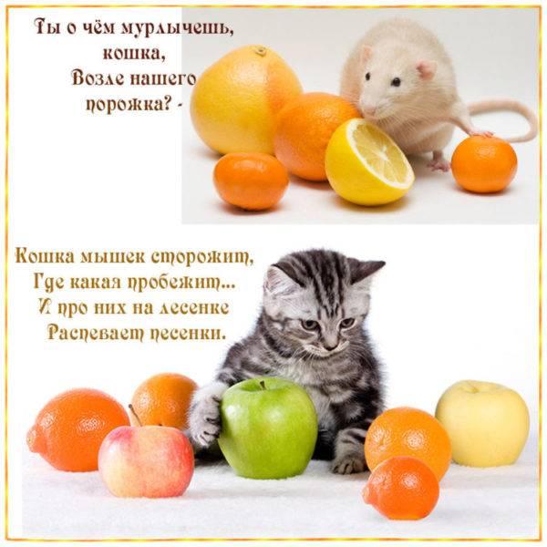 Почему и как кошки мурлыкают - лайфхакер