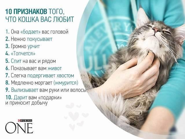 Что лучше кот или кошка в квартире?