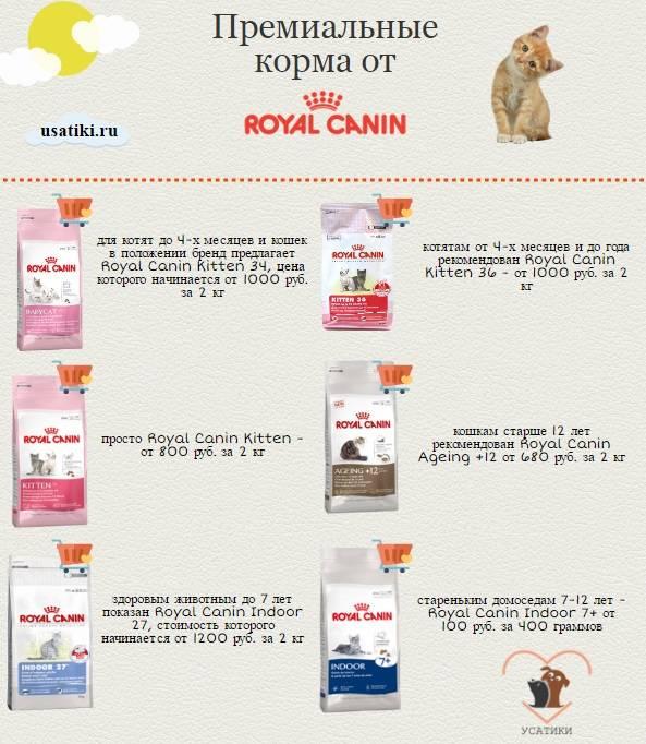 Рейтинг влажных кормов для котят (топ-7 лучших)