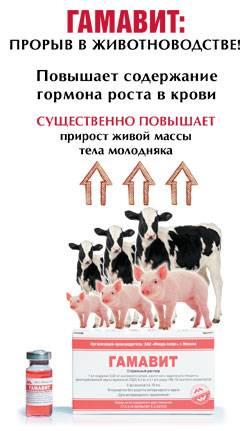 Дорош мария. ветеринарный справочник для владельцев кошек