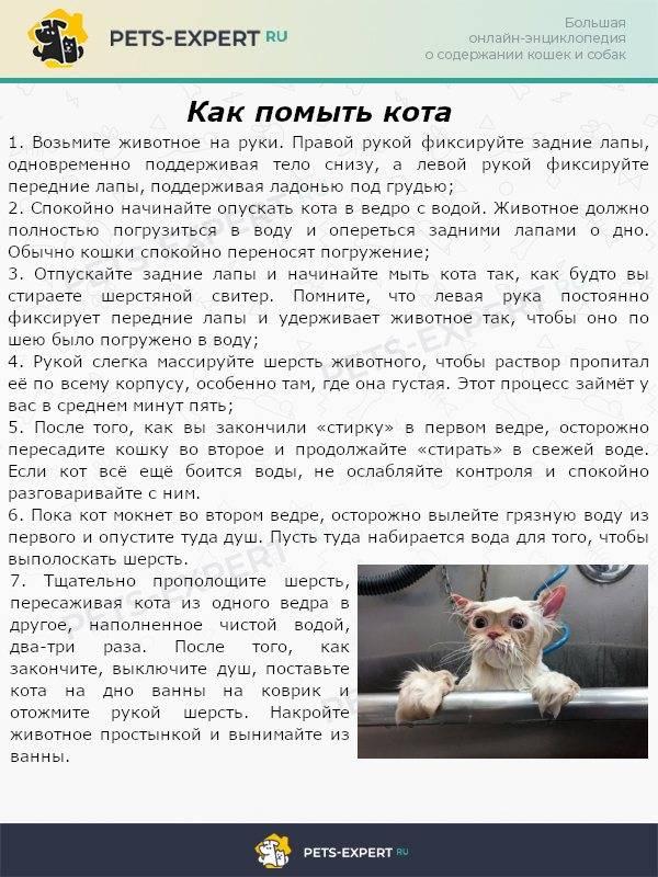 Как искупать кота, если он боится воды: новости, животные, кошки, купание, психология, советы, домашние животные