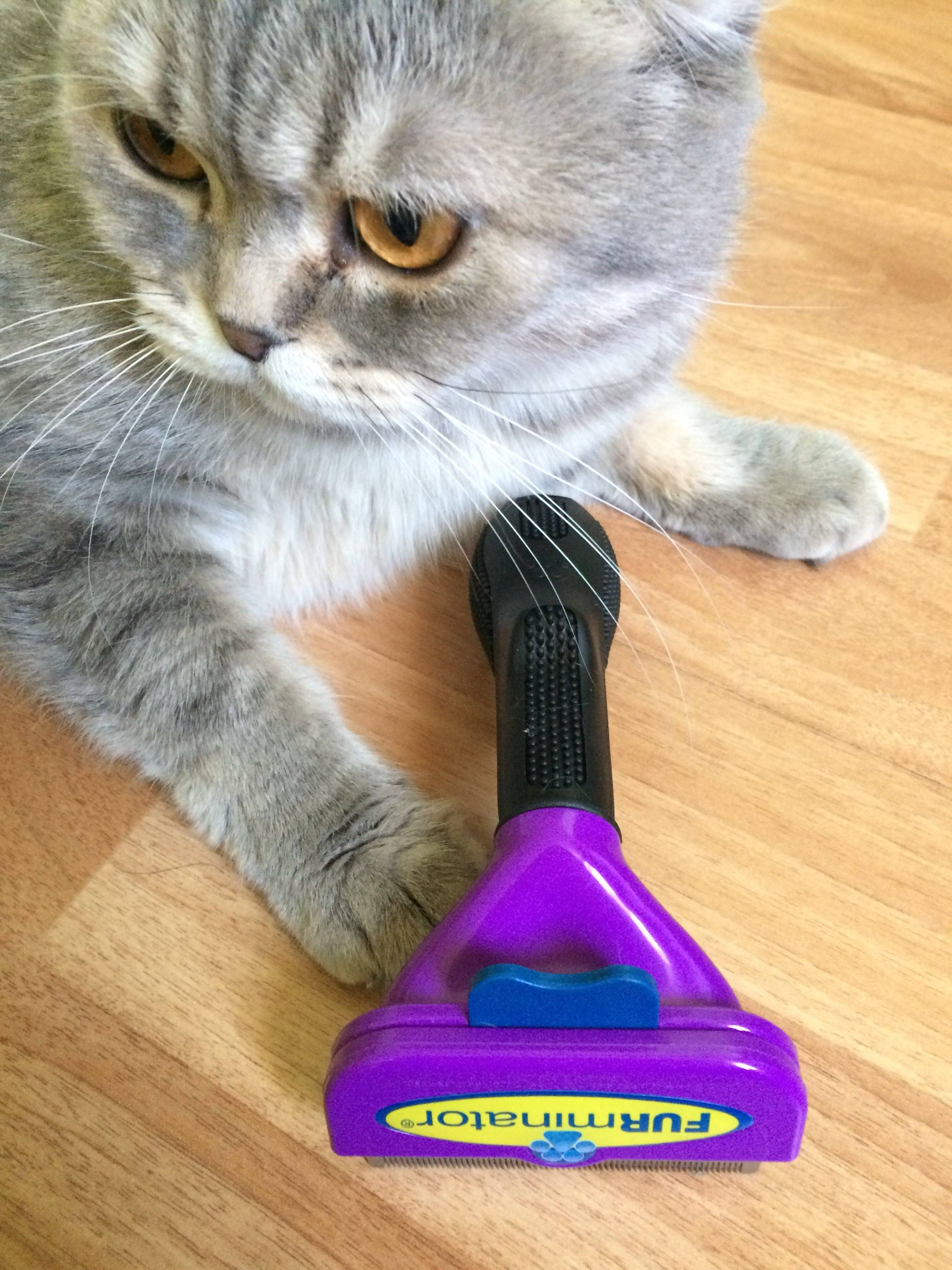 Фурминатор для собак и кошек: что это такое и как им пользоваться | royal groom