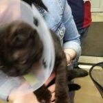 Мягкие лапки для кошек: особенности процедуры, уход за питомцем после операции