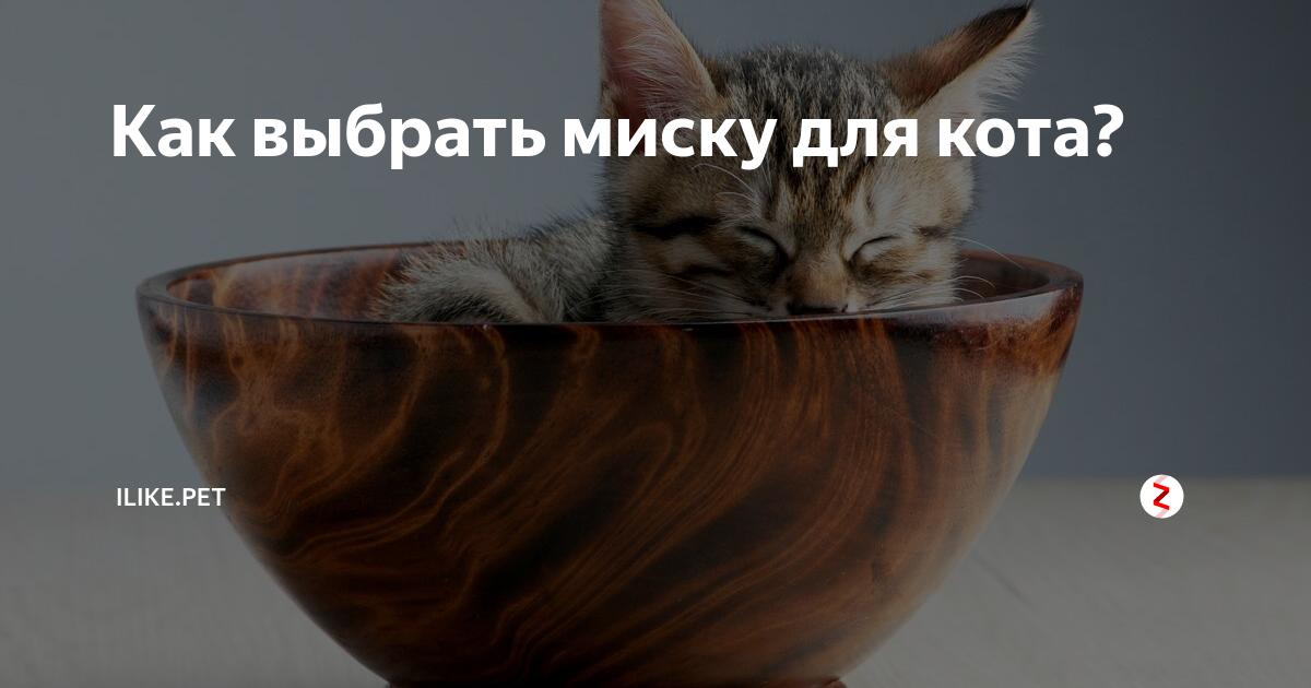 Миски для кошек: цвета, размеры, формы, объемы – что же выбрать?