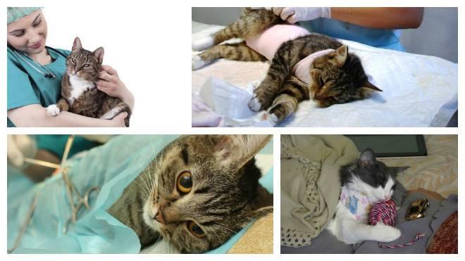 Стерилизация кошек от а до я: возраст и подготовка, особенности операции, советы