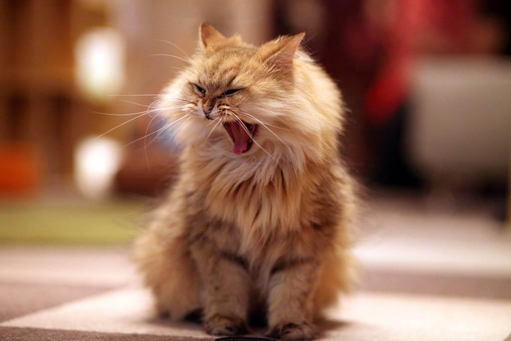 У меня аллергия на кошек можно ли завести