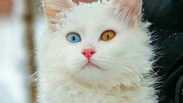 Какая продолжительность жизни кошек в домашних условиях?