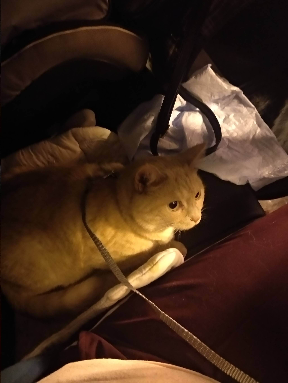 Путешествуем с кошкой