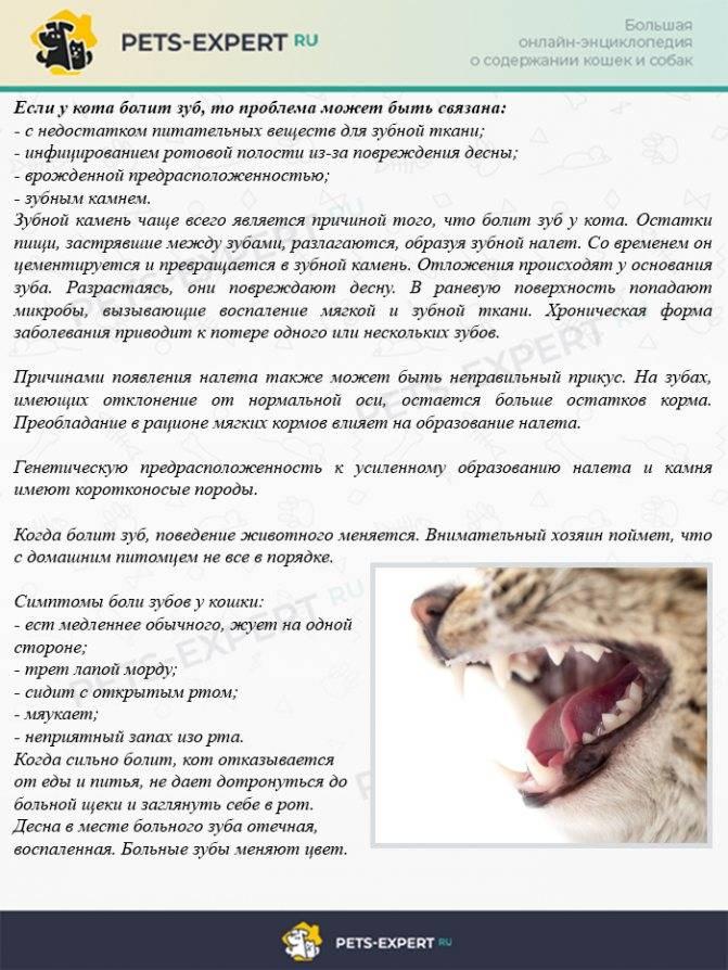У кота охрип голос причины и лечение