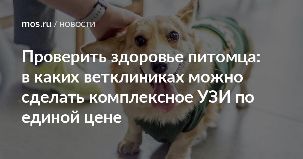 Ветеринарная помощь с выездом на дом в санкт-петербурге: цены, отзывы и адреса