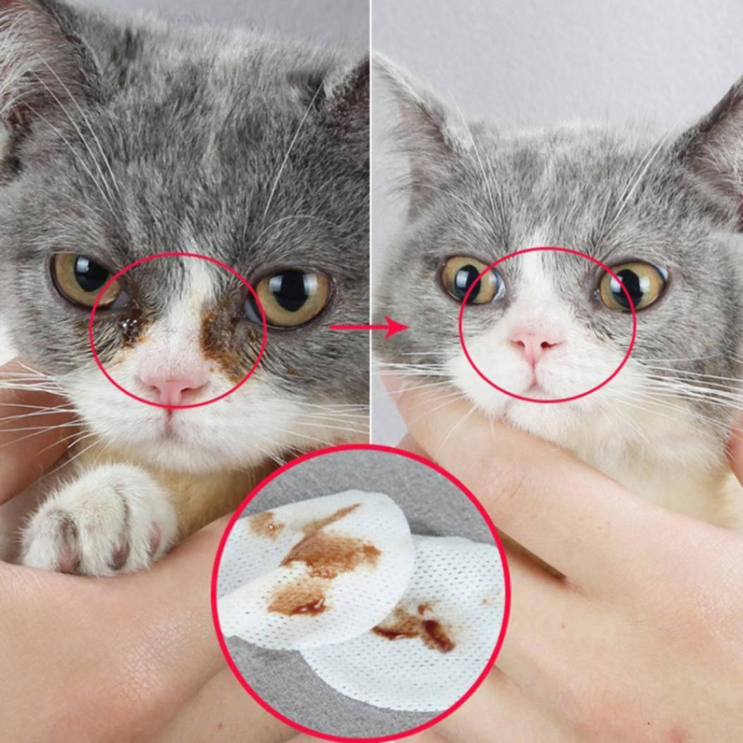 Чем промыть глаза котенку: алгоритм действий в домашних условиях, препараты