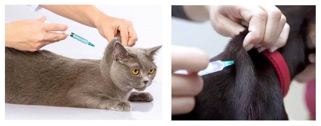 Уколы для кошек от гуляния - oozoo.ru