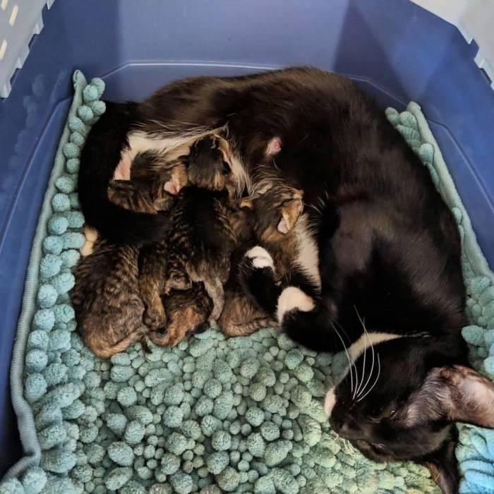 Сколько рожает кошка?