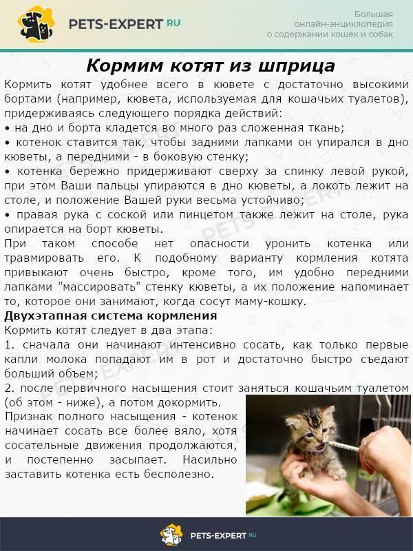 Как кормить кошку или котенка из шприца: пошаговая инструкция
