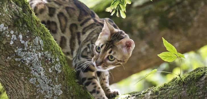 Мочекаменная болезнь у кошки: 13 симптомов указывающих на заболевание