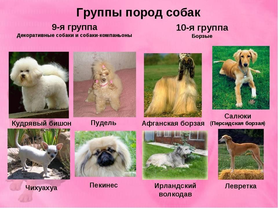 Породы собак средних размеров с фото, названиями и особенностями характера - знать про все