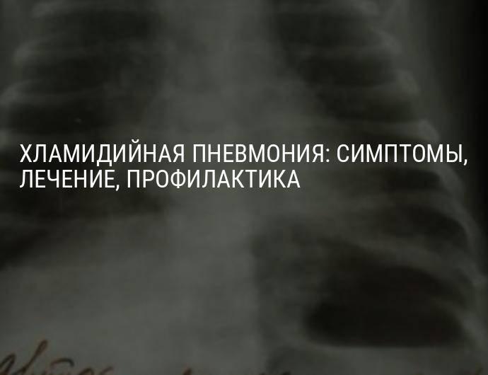 Пневмония (воспаление легких) у кошек и котов