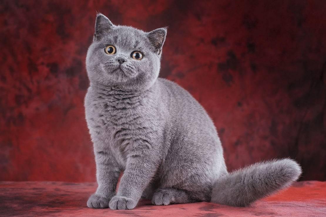 Английские имена для кошек
