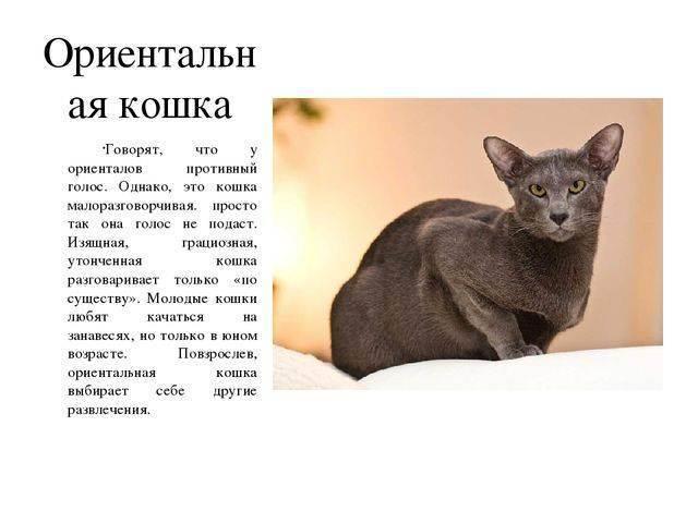 Звуки природы – кошка