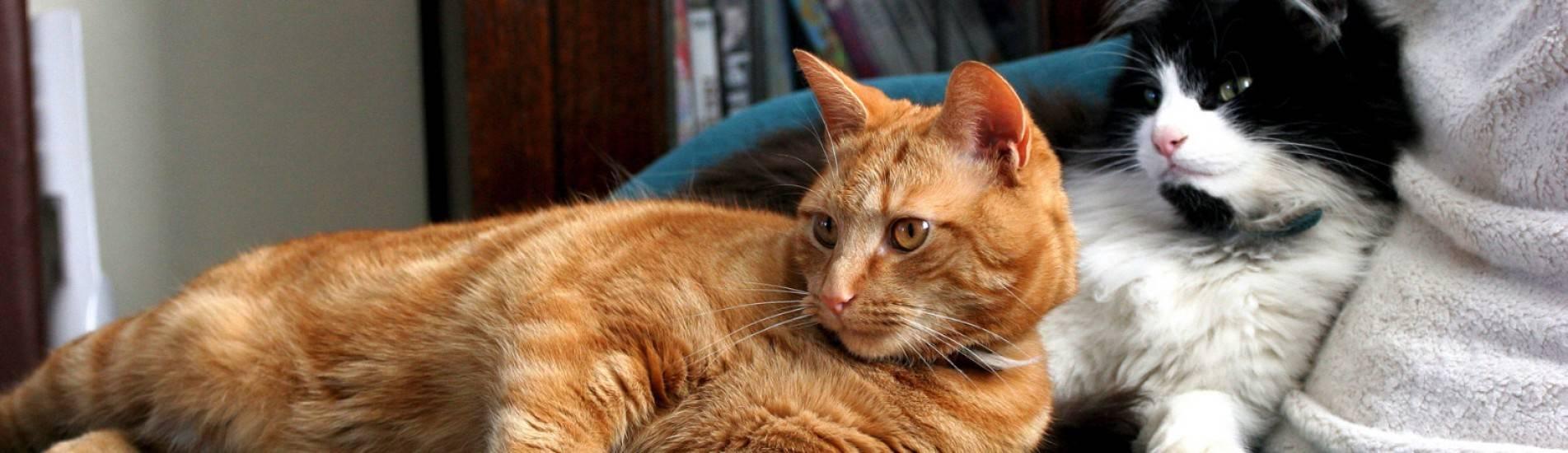 Как понять, что кошка готова к вязке: по первым признакам и поведению