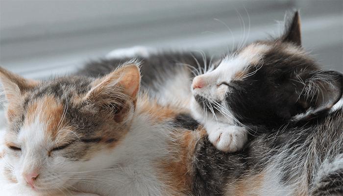 Толкование сновидений, в которых вам приснилась кошка