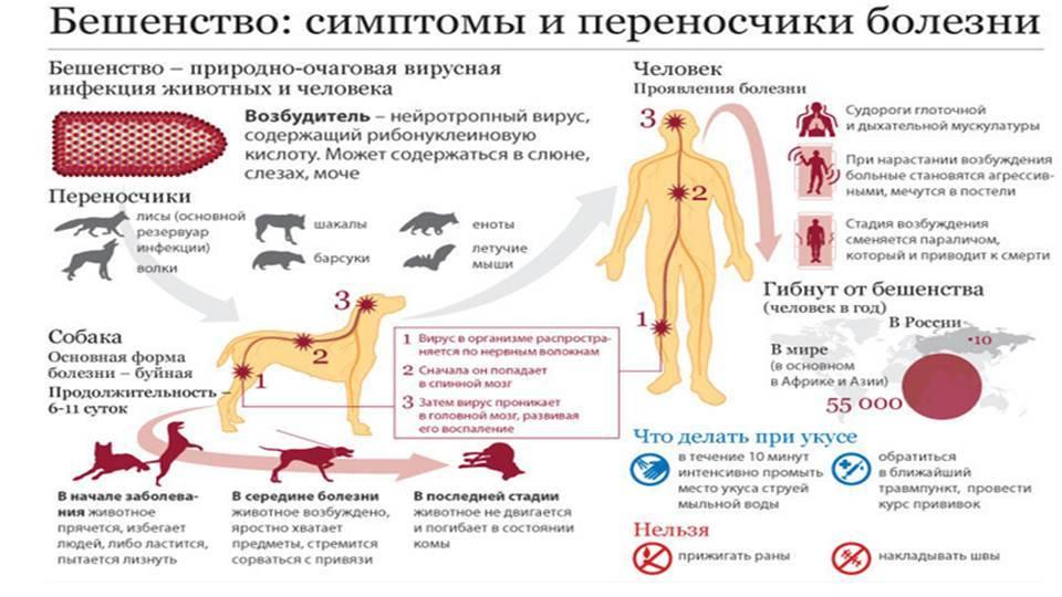 Инфекционный кошачий перитонит, fip (фип)
