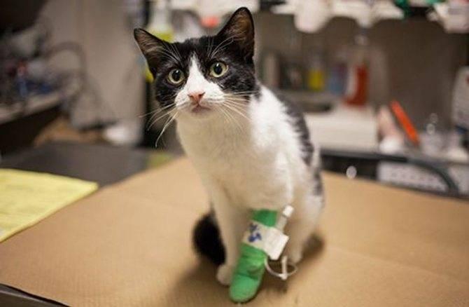 Почему у кошки рвота желтой жидкостью или кот рыгает белой пеной