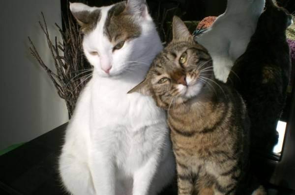Питание кошек. вся правда о сухом корме