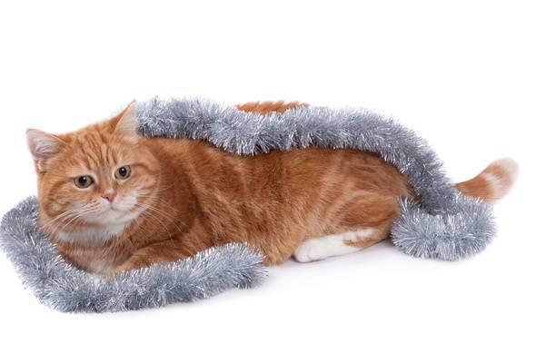 Кошка съела дождик с ёлки. как избавиться от инородного тела?