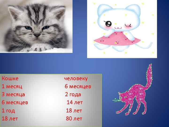 До какого возраста растут коты и кошки   обычные, домашние и другие породы