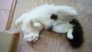 Как помочь и что давать кошке при течке