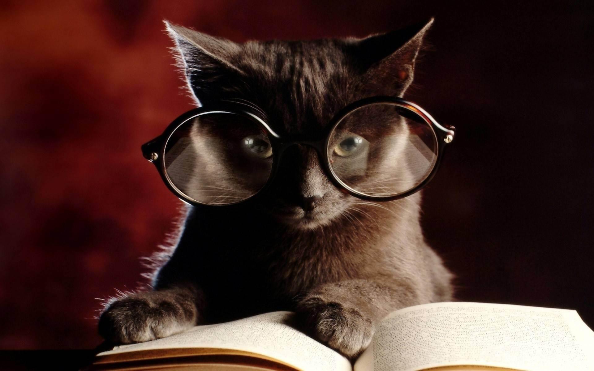 Как проверить, насколько умна ваша кошка