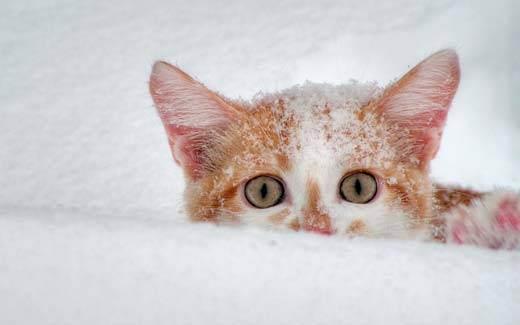 Аллергия на кота: что делать?
